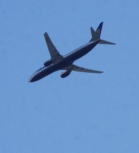 DSC_5401 Fly